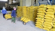 over 55000 tons of rice exports to korea may enjoy 5 preferential tax