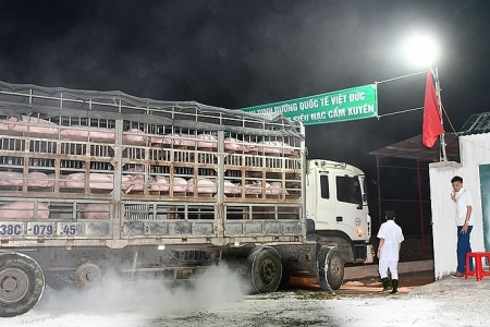 Vietnam to put thousands of imported pigs into COVID-19 quarantine