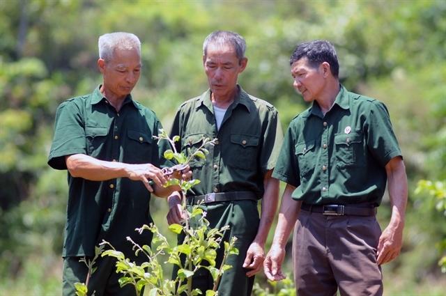 veteran leaves battlefield for success in farming fields
