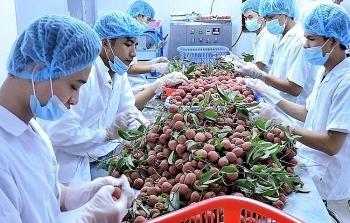 vietnams agricultural exports skyrocket