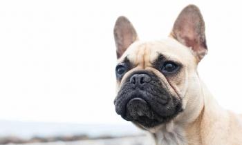 canada investigates ukraine flight after 38 puppies dead found on plane