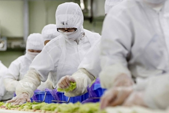 Vietnam ranks first in number of laborers granted Japan's new work visa