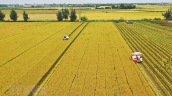Vietnam ranks fourth in Southeast Asia in food security