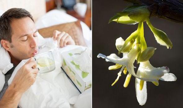 scmp honeysuckle flower can help treat flu virus