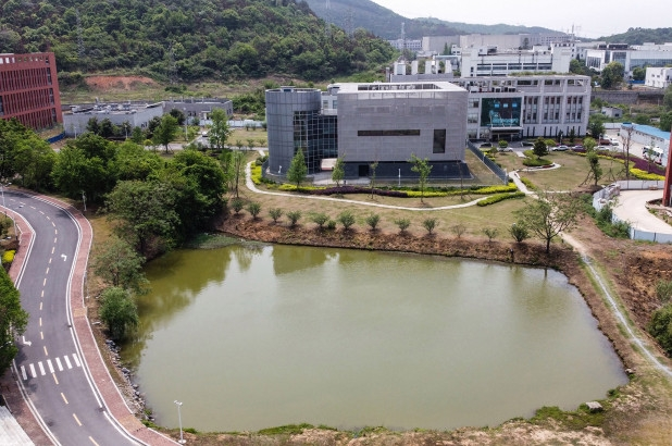 wuhan lab boss denies coronavirus link says virus cannot be man made