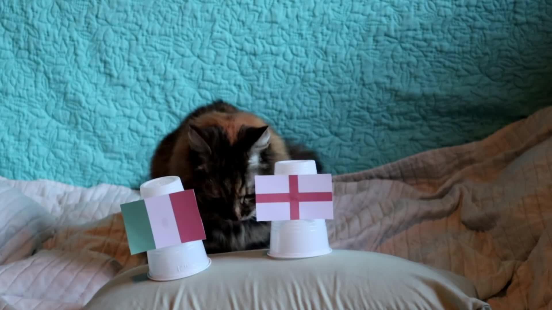 England vs Italy Final Predictions: Cats predicts Italy winter of EURO 2020