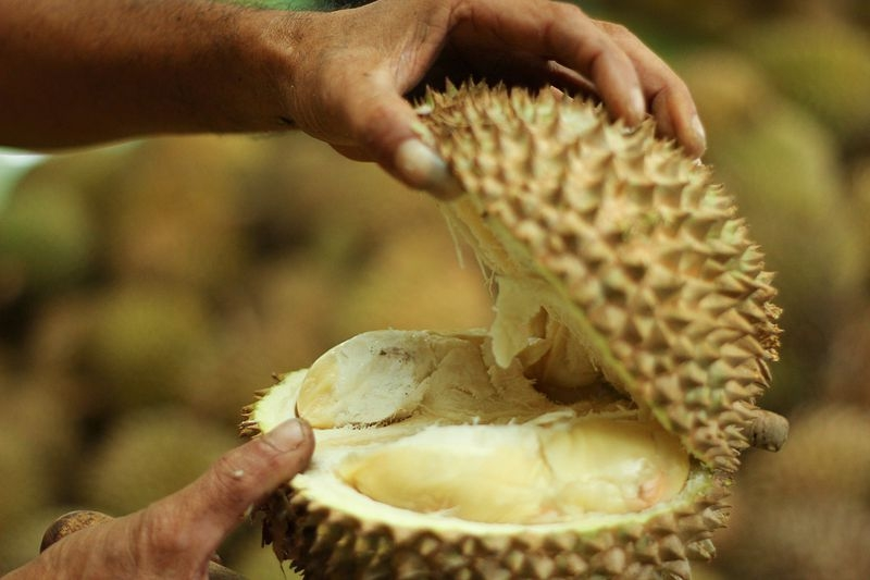 durian fruit hospitalises six and forces evacuation in germany