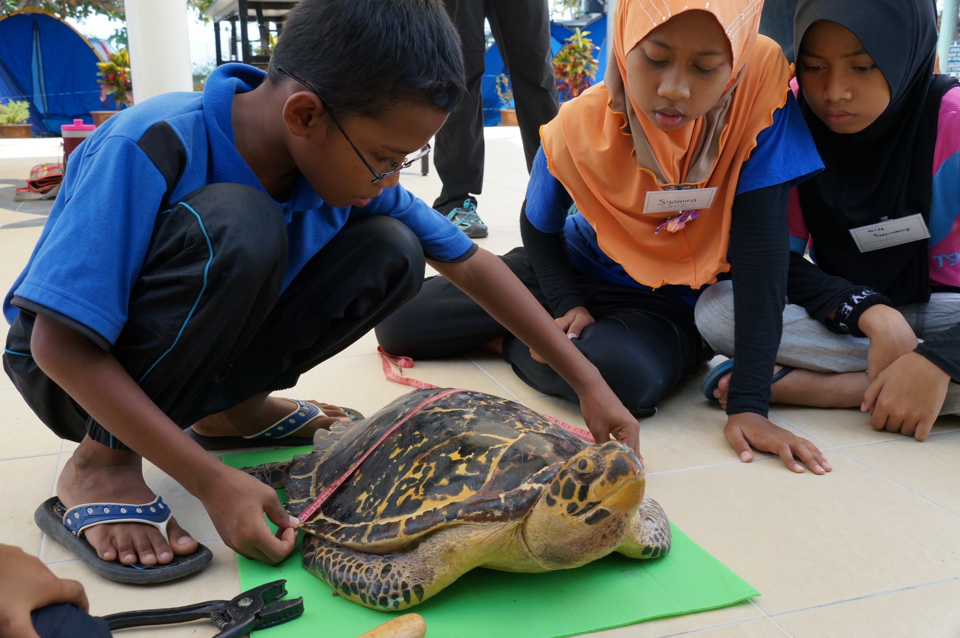 wwf malaysia welcomes tougher sentencing applied for wildlife crimes