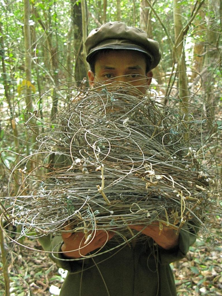 snaring wildlife animals may spawn disease transmission warns wwf
