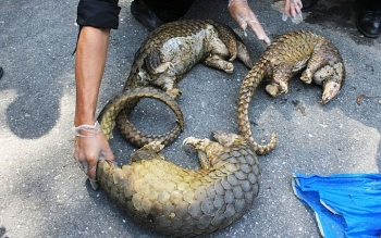 Vietnam bans wildlife trade to reduce risk of pandemics