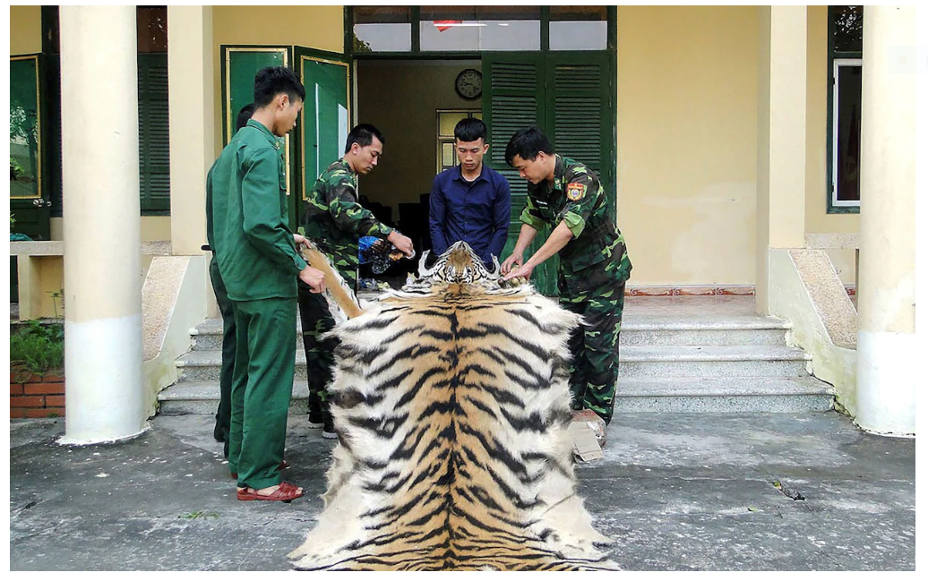 Vietnam's newban on illegal wildlife trade and consumption welcomed by international community
