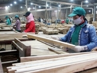 country earns nearly usd500 million from wood exports in january