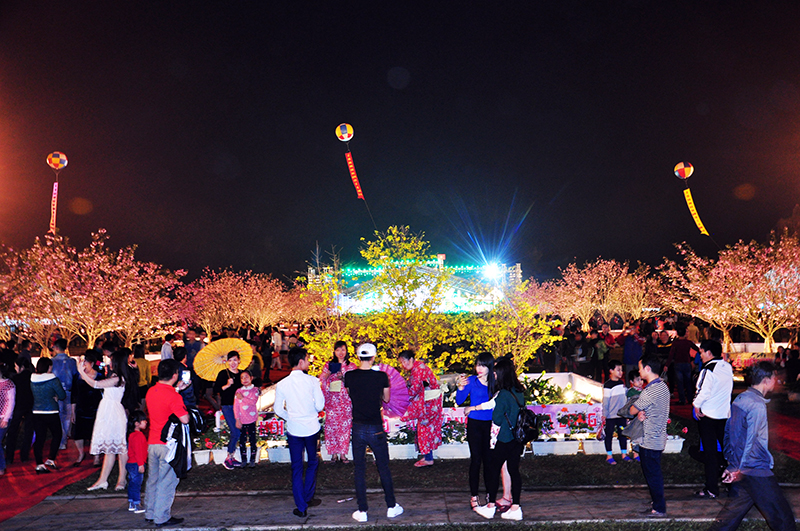 2017 Ha Long Cherry Blossom and Yen Tu Yellow Apricot Flower Festival to open in March