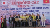 100 Japanese cherry trees planted in Bac Ninh