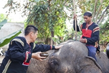 herbalist saves elephants in central highland