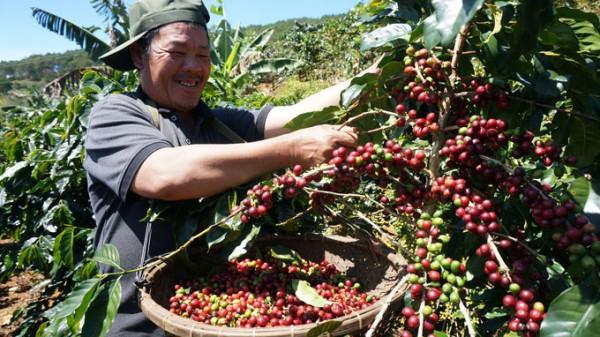 Forest degradation and forest landscape restoration through CAFÉ-REDD