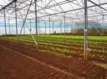 in vietnam an organic farmer tackles an agricultural paradox