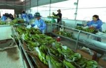 vietnam netherlands agree to enhance agricultural partnership