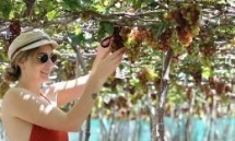 ninh thuan grape and wine festival to take place in late april