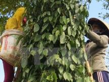 Pepper association proposes establishing transaction floor