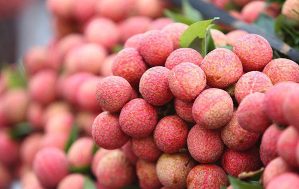Hai Duong province aims to harvest 40,000 tons of litchi in 2019