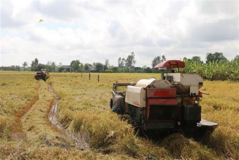 sbv urges banks to help rice farmers with loans