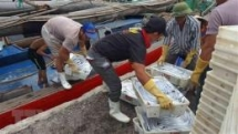 ec acknowledges vietnams efforts in preventing illegal fishing