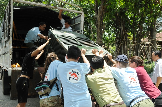 four paws viet rescues three asiatic black bears in binh duong