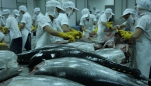 tuna exports to russia flourish