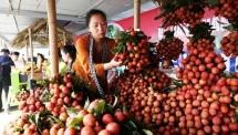 luc ngan bac giang lychee week kicks off in hanoi