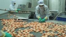 aquatic product export estimated at usd 394 billion in first half