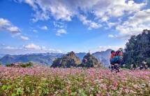 ha giang buckwheat festival 2016 to open in oct