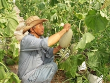 vietnam us enhance farm produce trade