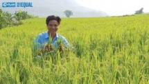 strengthening economic empowerment for youth and women in the sustainable value chain lai chau