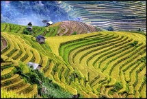 mu cang chai terraced fields beauty in autumn