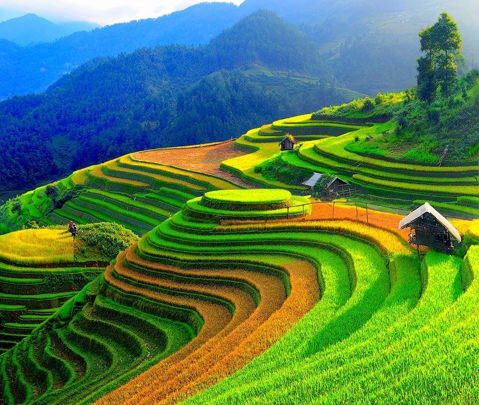 Cultural week of Mu Cang Chai terraced paddy fields opens