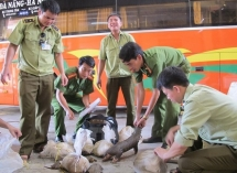 vietnam to beef up fight against illegal wildlife trade