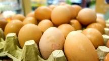 eu contaminated eggs scandal spreads to 45 countries