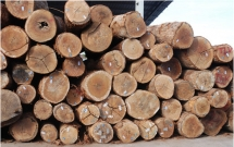 wood industry feels the heat from chinese buyers