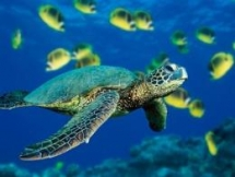 sick sea turtle has been rescued and cared in da nang