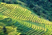 vietnam rice fields look amazing and monitory from the space