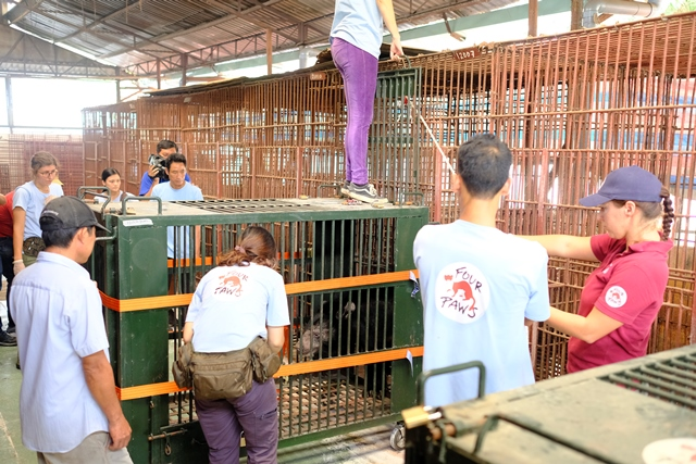 FOUR PAWS Viet rescues 7 bile bears
