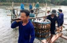us remains vietnams largest aquatic export market