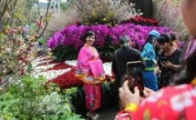 japanese cherry blossom festival slated for next march