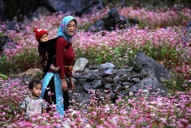 photo exhibition to feature karst plateau buckwheat flowers