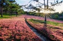 romantic da lat with pink grass hills