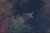 Vietnamese pilot killed in UK mid-air collision