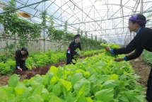 australian project promotes gender equality in agriculture