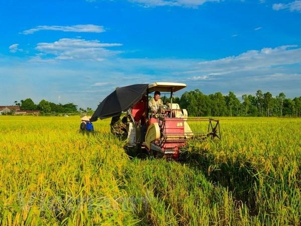 Vinh Long to host fourth Vietnam Rice Festival next month