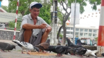 vietnamese man with hard earned money feeds pigeons for inner peace happiness amidst urban hustle